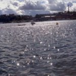 Swimming Riddarfjärden, Stockholm Triathlon 2014